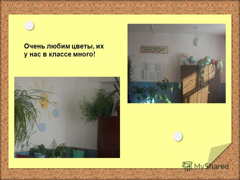 Очень любим цветы, их у нас в классе много!