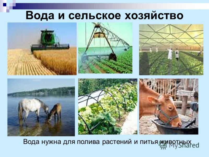Вода и сельское хозяйство Вода нужна для полива растений и питья животных