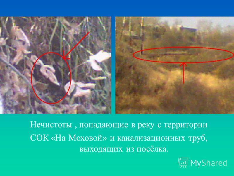 Нечистоты, попадающие в реку с территории СОК «На Моховой» и канализационных труб, выходящих из посёлка.