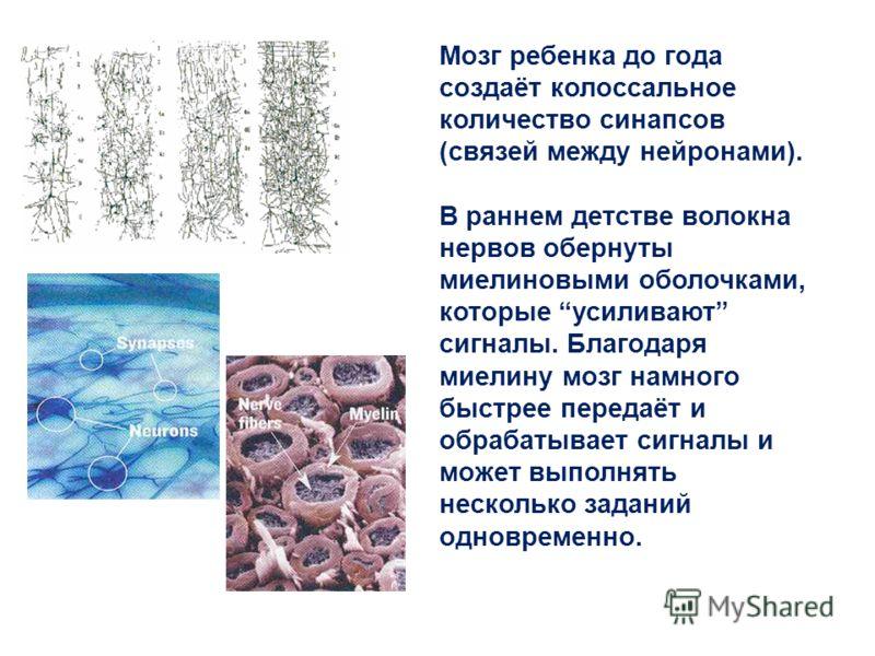 Мозг ребенка до года создаёт колоссальное количество синапсов (связей между нейронами). В раннем детстве волокна нервов обернуты миелиновыми оболочками, которые усиливают сигналы. Благодаря миелину мозг намного быстрее передаёт и обрабатывает сигналы