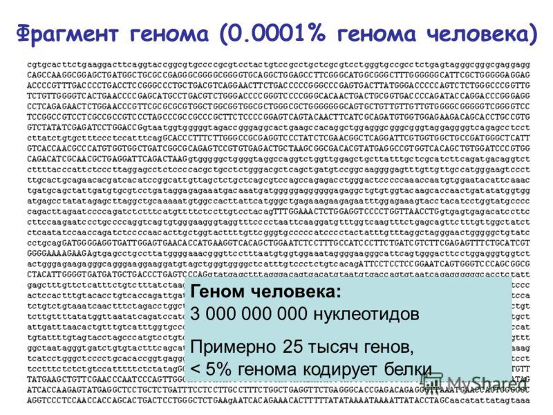 Фрагмент генома (0.0001% генома человека) Геном человека: 3 000 000 000 нуклеотидов Примерно 25 тысяч генов, < 5% генома кодирует белки