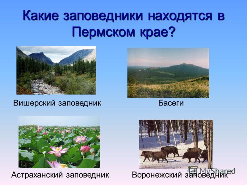 7 Какие заповедники находятся в Пермском крае? Вишерский заповедникБасеги Астраханский заповедникВоронежский заповедник
