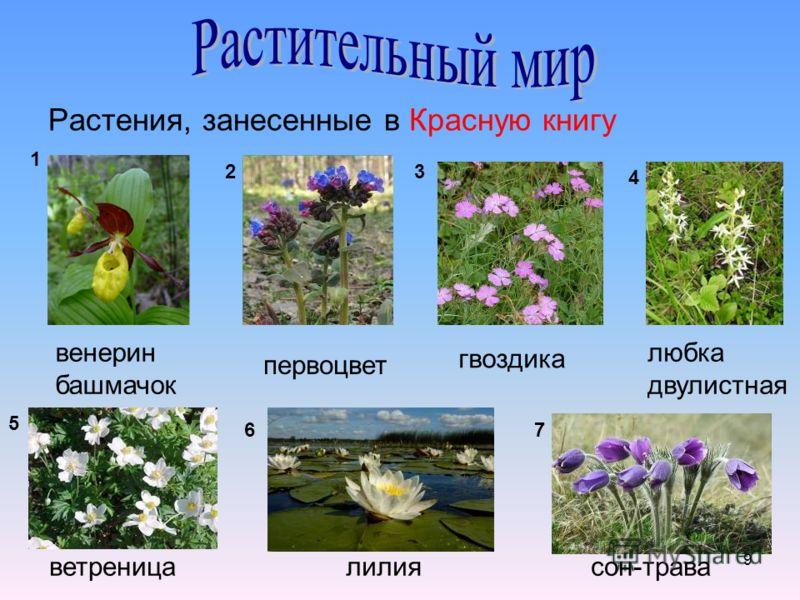 9 Растения, занесенные в Красную книгу венерин башмачок первоцвет гвоздика любка двулистная ветреницалилиясон-трава 1 23 4 5 67