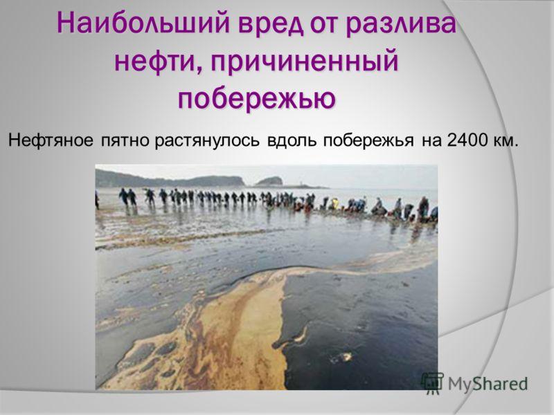 Наибольший вред от разлива нефти, причиненный побережью Нефтяное пятно растянулось вдоль побережья на 2400 км.