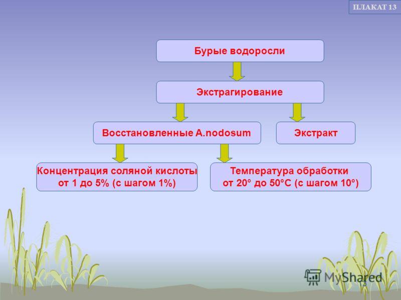13 ПЛАКАТ 13 Восстановленные A.nodosum Концентрация соляной кислоты от 1 до 5% (с шагом 1%) Температура обработки от 20° до 50°С (с шагом 10°) Бурые водоросли Экстрагирование Экстракт
