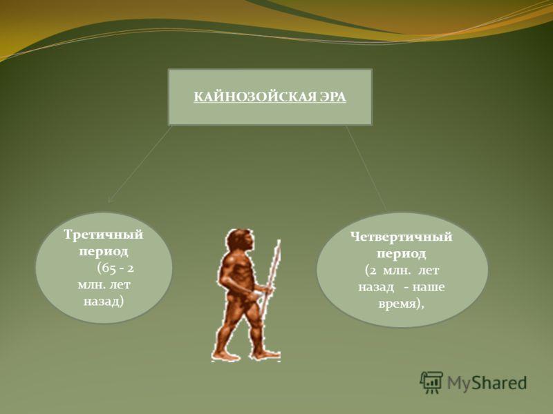 КАЙНОЗОЙСКАЯ ЭРА Третичный период (65 - 2 млн. лет назад) Четвертичный период (2 млн. лет назад - наше время),
