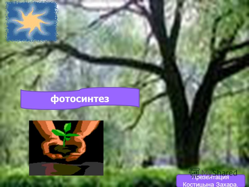 фотосинтез Презентация Костицына Захара.