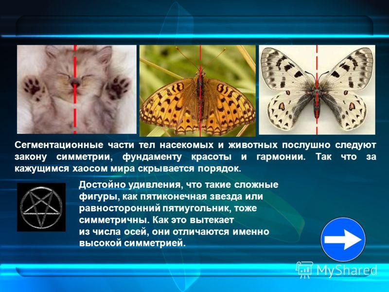 Сегментационные части тел насекомых и животных послушно следуют закону симметрии, фундаменту красоты и гармонии. Так что за кажущимся хаосом мира скрывается порядок. Достойно удивления, что такие сложные фигуры, как пятиконечная звезда или равносторо