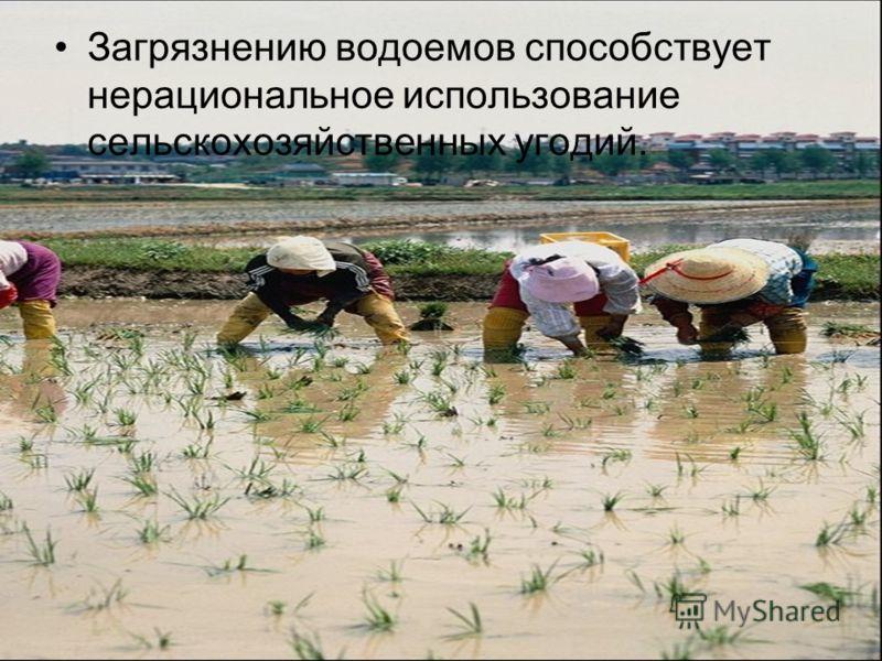 Загрязнению водоемов способствует нерациональное использование сельскохозяйственных угодий.