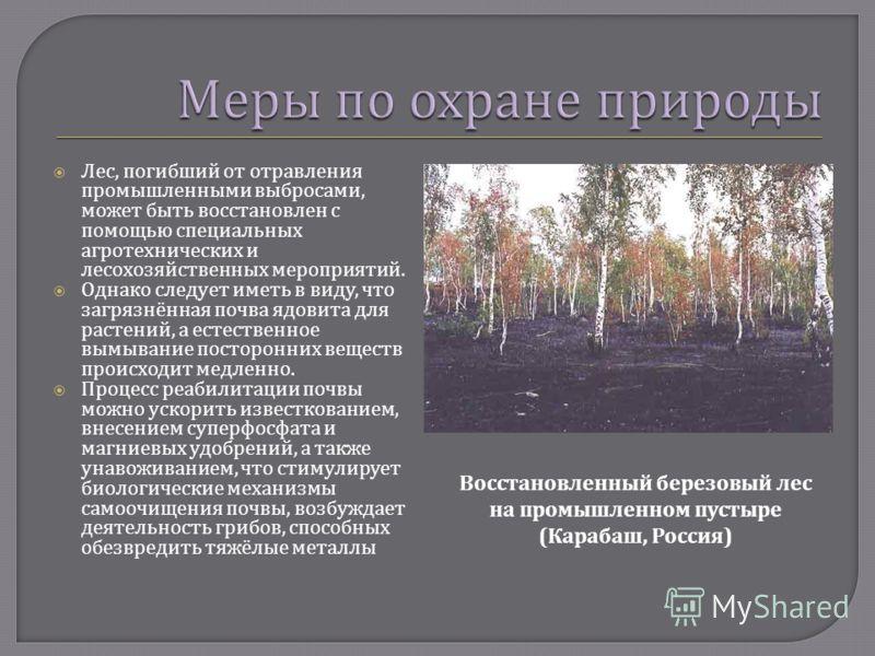 Лес, погибший от отравления промышленными выбросами, может быть восстановлен с помощью специальных агротехнических и лесохозяйственных мероприятий. Однако следует иметь в виду, что загрязнённая почва ядовита для растений, а естественное вымывание пос