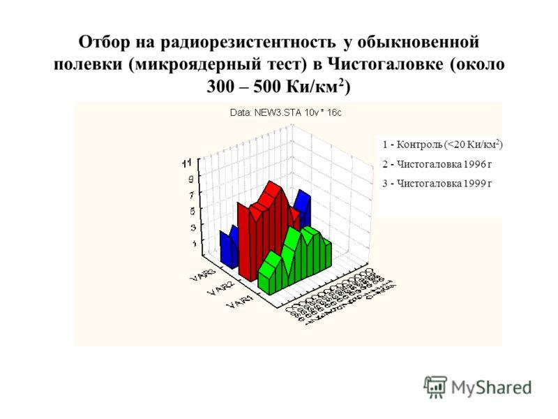 Отбор на радиорезистентность у обыкновенной полевки (микроядерный тест) в Чистогаловке (около 300 – 500 Ки/км 2 ) 1 - Контроль (