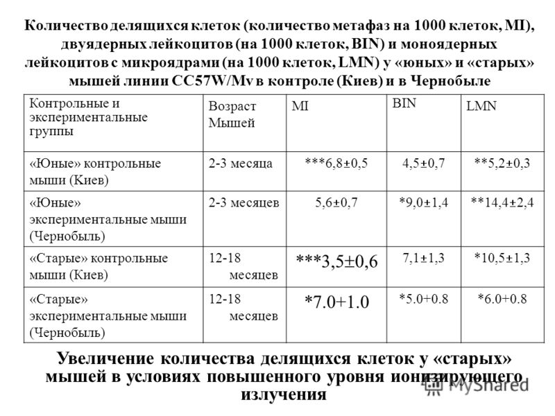 Количество делящихся клеток (количество метафаз на 1000 клеток, MI), двуядерных лейкоцитов (на 1000 клеток, BIN) и моноядерных лейкоцитов с микроядрами (на 1000 клеток, LMN) у «юных» и «старых» мышей линии CC57W/Mv в контроле (Киев) и в Чернобыле Кон