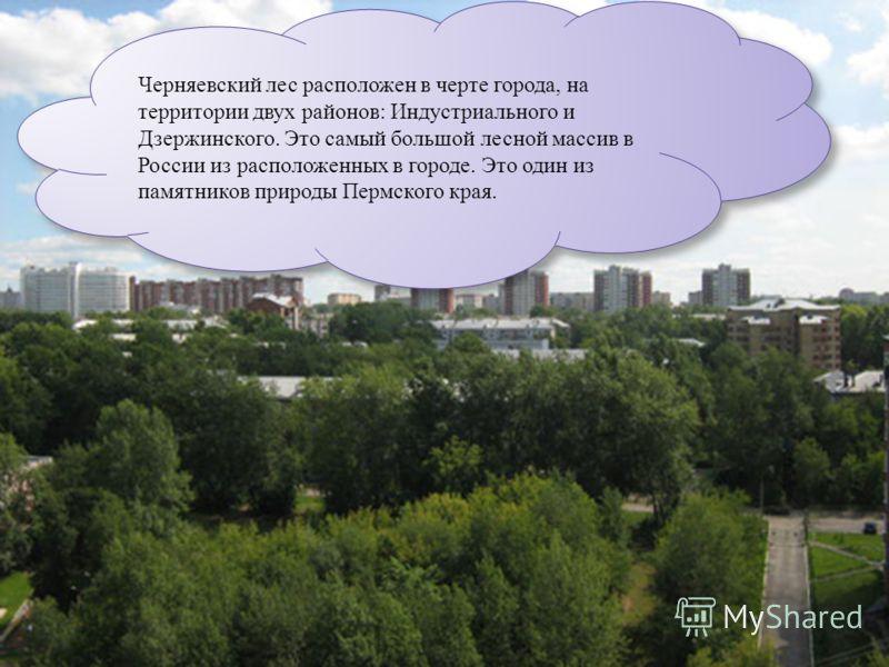 Черняевский лес расположен в черте города, на территории двух районов: Индустриального и Дзержинского. Это самый большой лесной массив в России из расположенных в городе. Это один из памятников природы Пермского края.