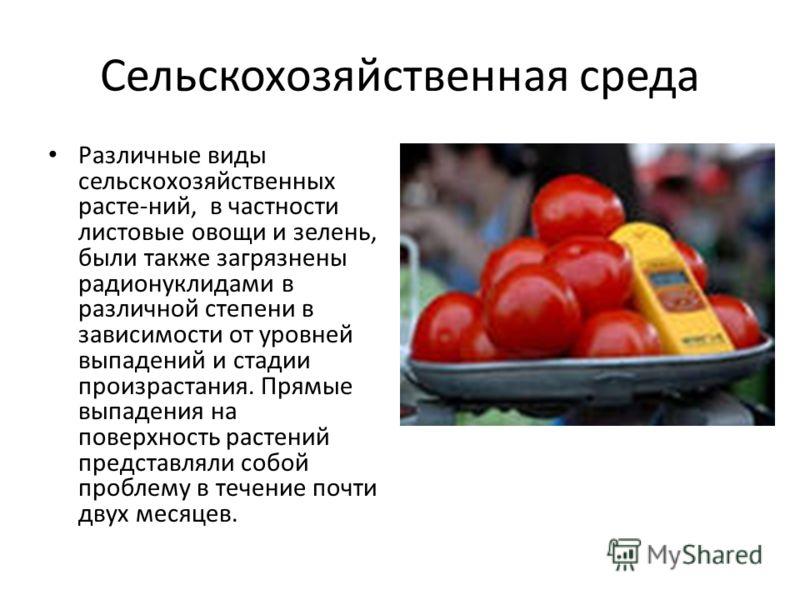 Сельскохозяйственная среда Различные виды сельскохозяйственных расте-ний, в частности листовые овощи и зелень, были также загрязнены радионуклидами в различной степени в зависимости от уровней выпадений и стадии произрастания. Прямые выпадения на пов