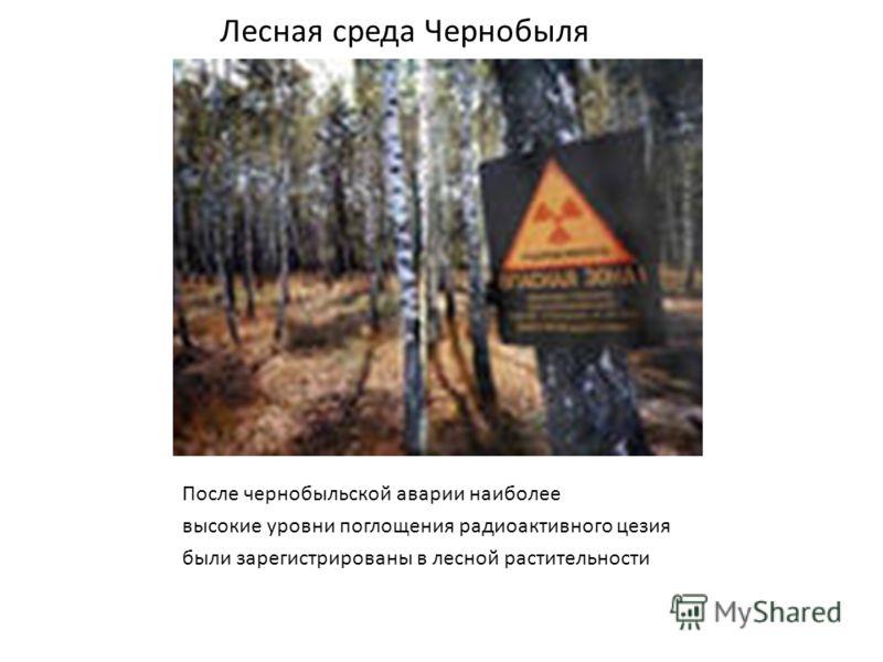 Лесная среда Чернобыля После чернобыльской аварии наиболее высокие уровни поглощения радиоактивного цезия были зарегистрированы в лесной растительности