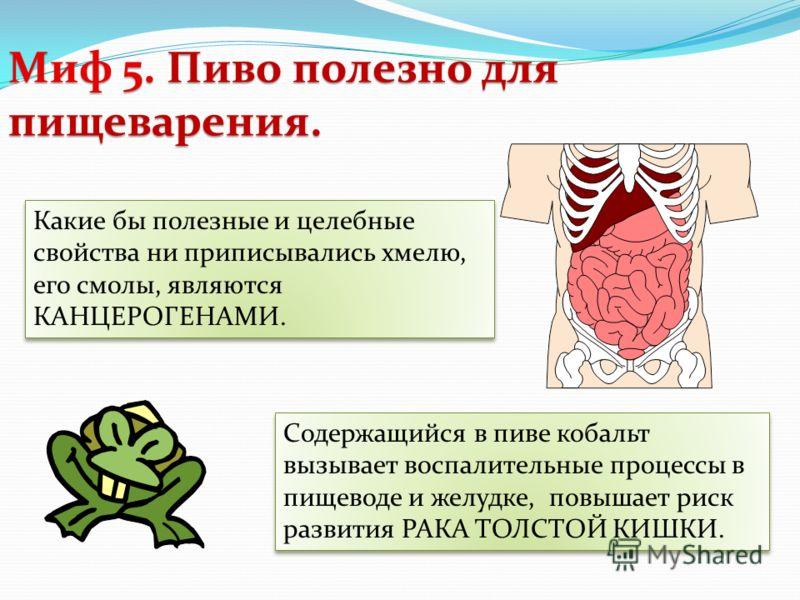 Миф 5. Пиво полезно для пищеварения. Какие бы полезные и целебные свойства ни приписывались хмелю, его смолы, являются КАНЦЕРОГЕНАМИ. Содержащийся в пиве кобальт вызывает воспалительные процессы в пищеводе и желудке, повышает риск развития РАКА ТОЛСТ