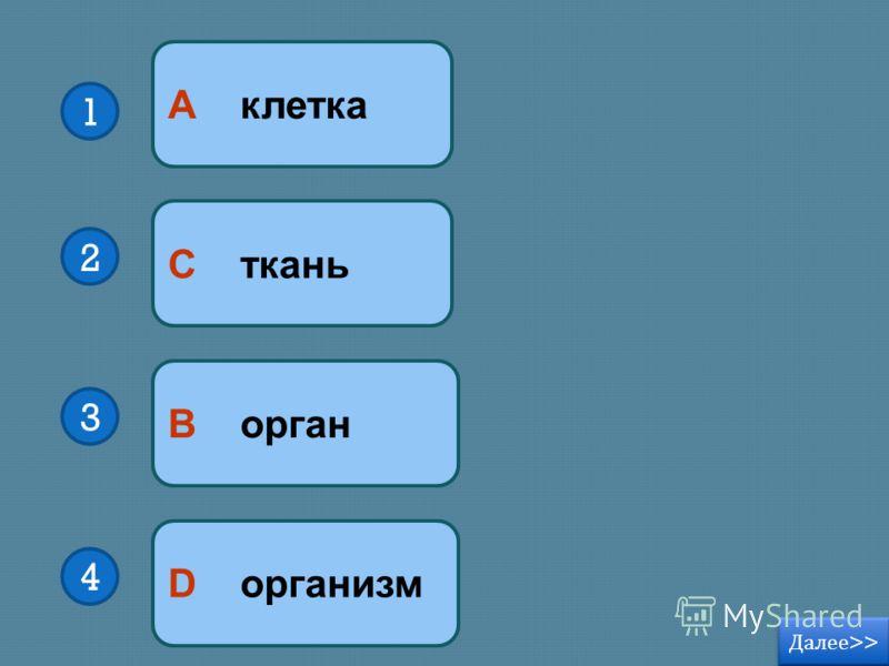 В орган D организм С ткань А клетка 1 2 3 4 Далее >> Далее >>