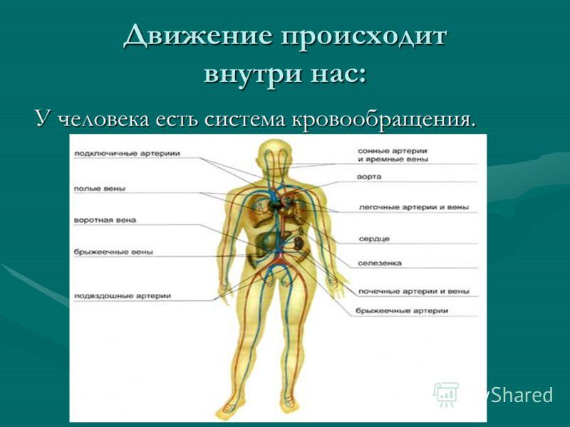 Движение происходит внутри нас: У человека есть система кровообращения.