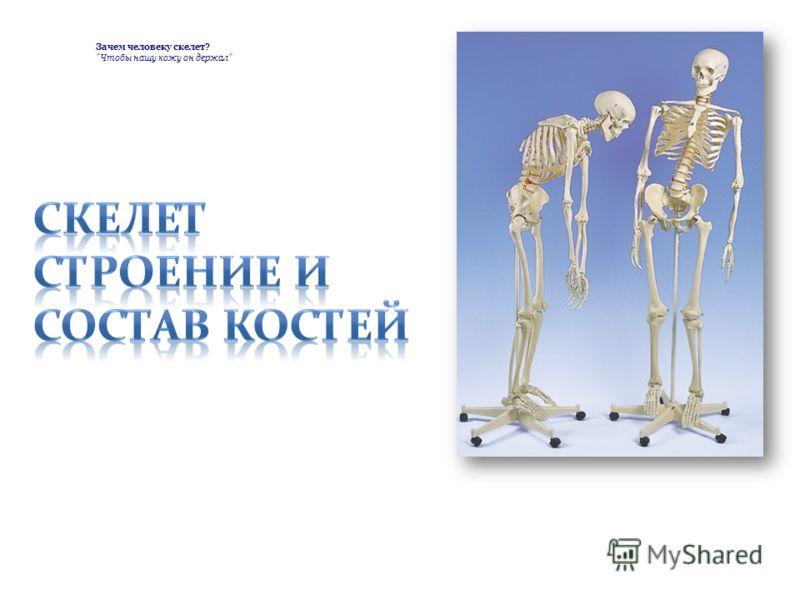 Зачем человеку скелет? Чтобы нашу кожу он держал