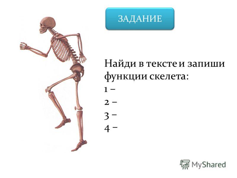 ЗАДАНИЕ Найди в тексте и запиши функции скелета: 1 – 2 – 3 – 4 –
