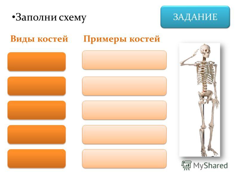 ЗАДАНИЕ Заполни схему Виды костейПримеры костей