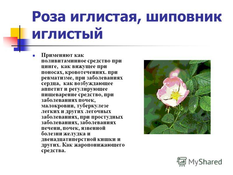 Роза иглистая, шиповник иглистый Применяют как поливитаминное средство при цинге, как вяжущее при поносах, кровотечениях. при ревматизме, при заболеваниях сердца, как возбуждающее аппетит и регулирующее пищеварение средство, при заболеваниях почек, м