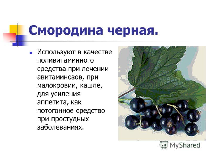 Смородина черная. Используют в качестве поливитаминного средства при лечении авитаминозов, при малокровии, кашле, для усиления аппетита, как потогонное средство при простудных заболеваниях.