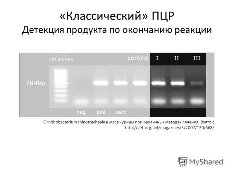 «Классический» ПЦР Детекция продукта по окончанию реакции Ornithobacterium rhinotracheale в мясе курицы при различных методах лечения. Взято с http://vettorg.net/magazines/3/2007/130/668/
