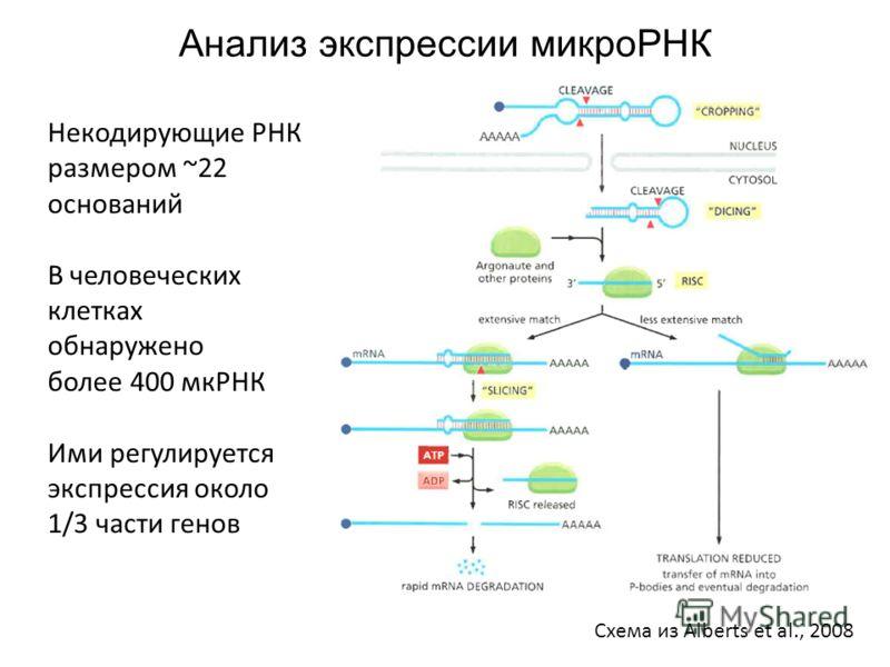 Анализ экспрессии микроРНК Схема из Alberts et al., 2008 Некодирующие РНК размером ~22 оснований В человеческих клетках обнаружено более 400 мкРНК Ими регулируется экспрессия около 1/3 части генов