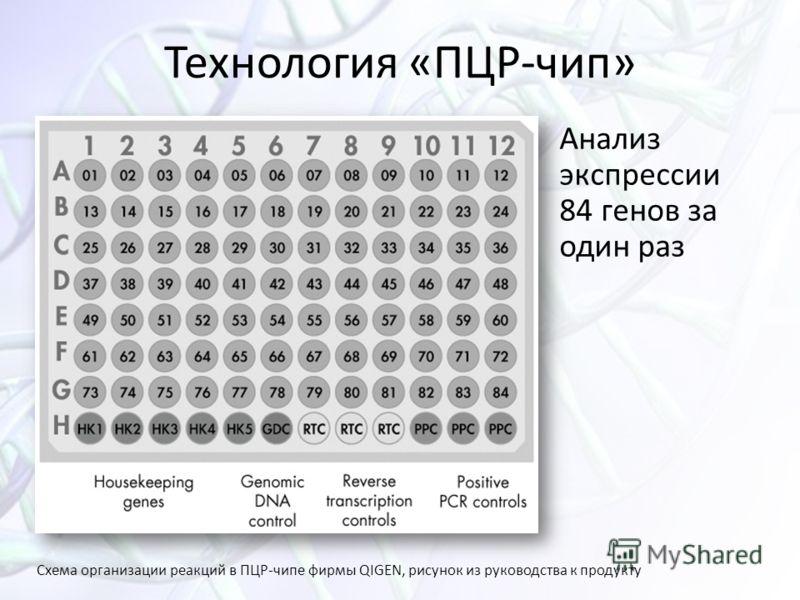 Технология «ПЦР-чип» Анализ экспрессии 84 генов за один раз Схема организации реакций в ПЦР-чипе фирмы QIGEN, рисунок из руководства к продукту