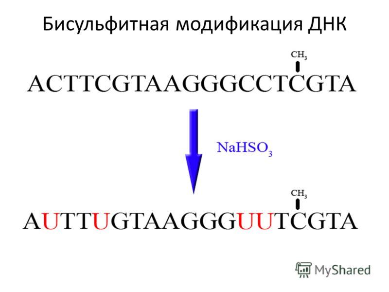 Анализ уровня метилирования ДНК – Метил-чувствительная ПЦР – Метил-специфичная ПЦР – Технология «ПЦР-чип» для анализа метилирования промоторов генов – Анализ кривой плавления ДНК, обработанной бисульфитом Na (MS-HRM) – Секвенирование ДНК, обработанно