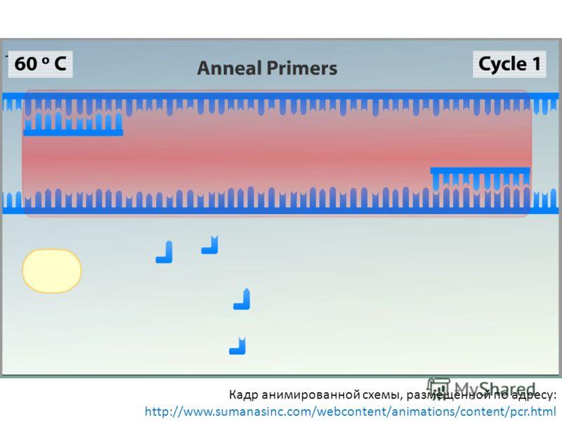 Кадр анимированной схемы, размещённой по адресу: http://www.sumanasinc.com/webcontent/animations/content/pcr.html