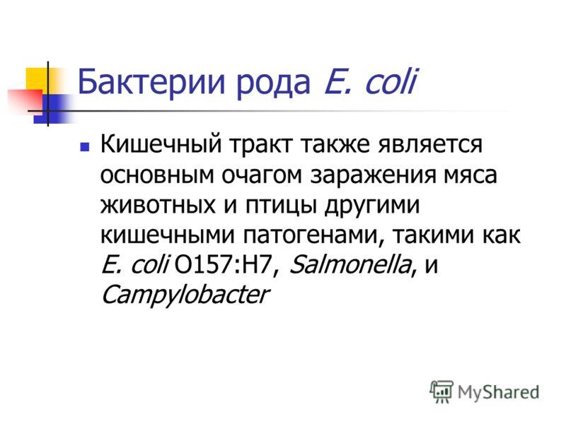 Бактерии рода E. coli Кишечный тракт также является основным очагом заражения мяса животных и птицы другими кишечными патогенами, такими как E. coli O157:H7, Salmonella, и Campylobacter