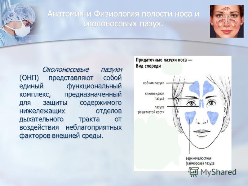 Анатомия и Физиология полости носа и околоносовых пазух. Околоносовые пазухи (ОНП) представляют собой единый функциональный комплекс, предназначенный для защиты содержимого нижележащих отделов дыхательного тракта от воздействия неблагоприятных фактор