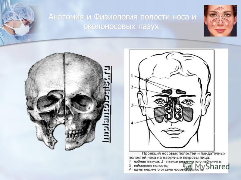Анатомия и Физиология полости носа и околоносовых пазух.