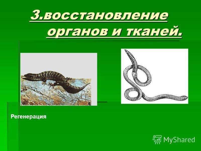 Регенерация 3.восстановление органов и тканей.