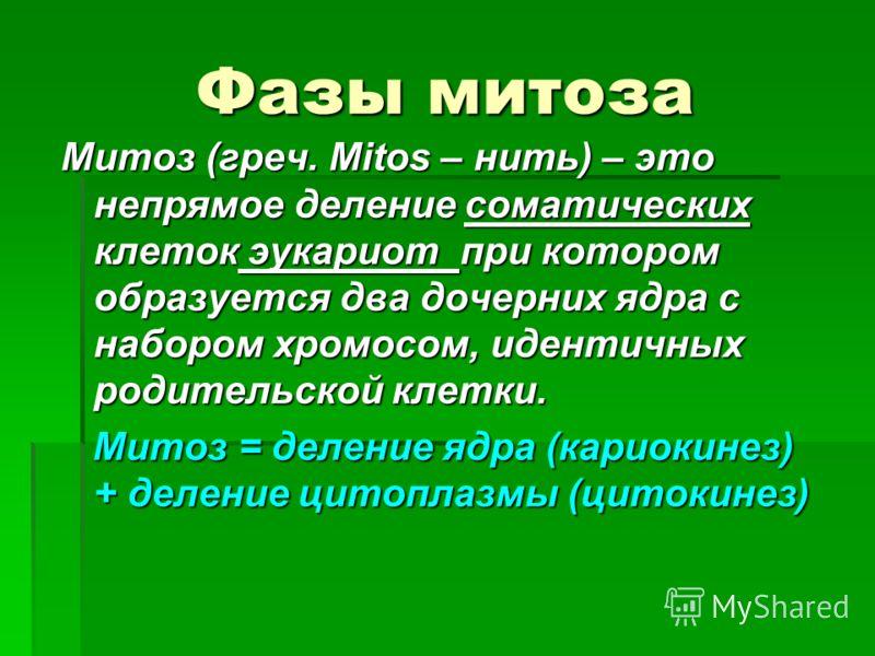 Фазы митоза Митоз (греч. Mitos – нить) – это непрямое деление соматических клеток эукариот при котором образуется два дочерних ядра с набором хромосом, идентичных родительской клетки. Митоз = деление ядра (кариокинез) + деление цитоплазмы (цитокинез)