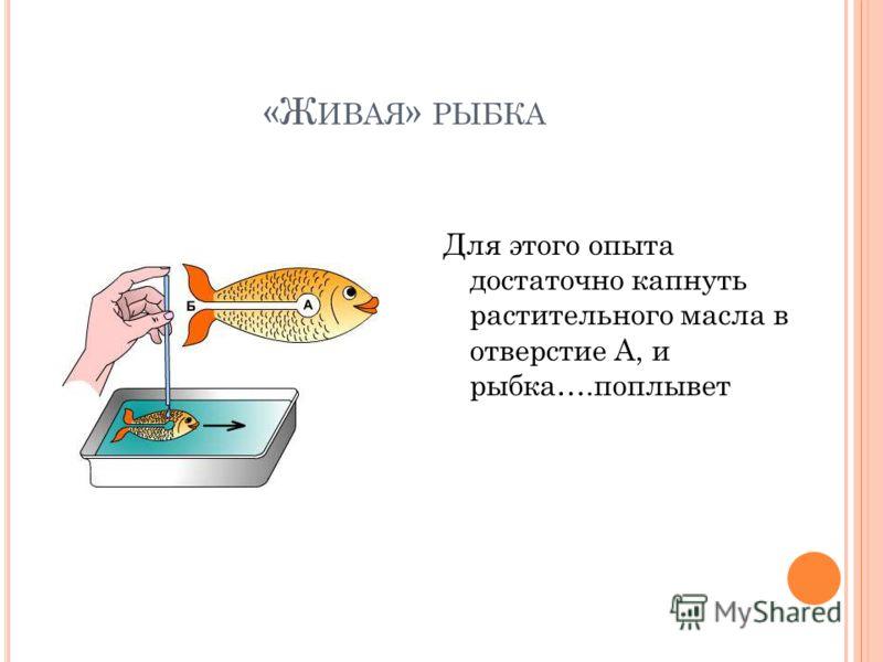 «Ж ИВАЯ » РЫБКА Для этого опыта достаточно капнуть растительного масла в отверстие А, и рыбка….поплывет