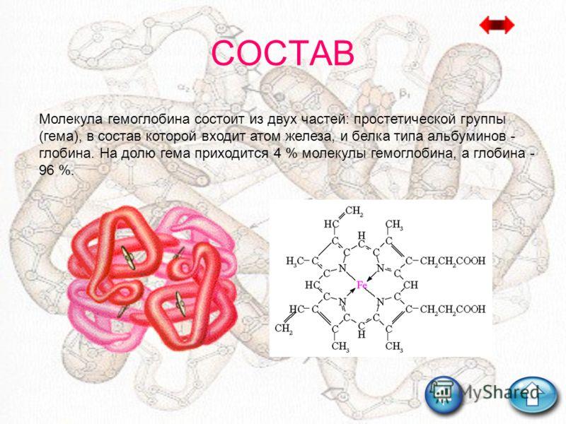 СОСТАВ Молекула гемоглобина состоит из двух частей: простетической группы (гема), в состав которой входит атом железа, и белка типа альбуминов - глобина. На долю гема приходится 4 % молекулы гемоглобина, а глобина - 96 %.