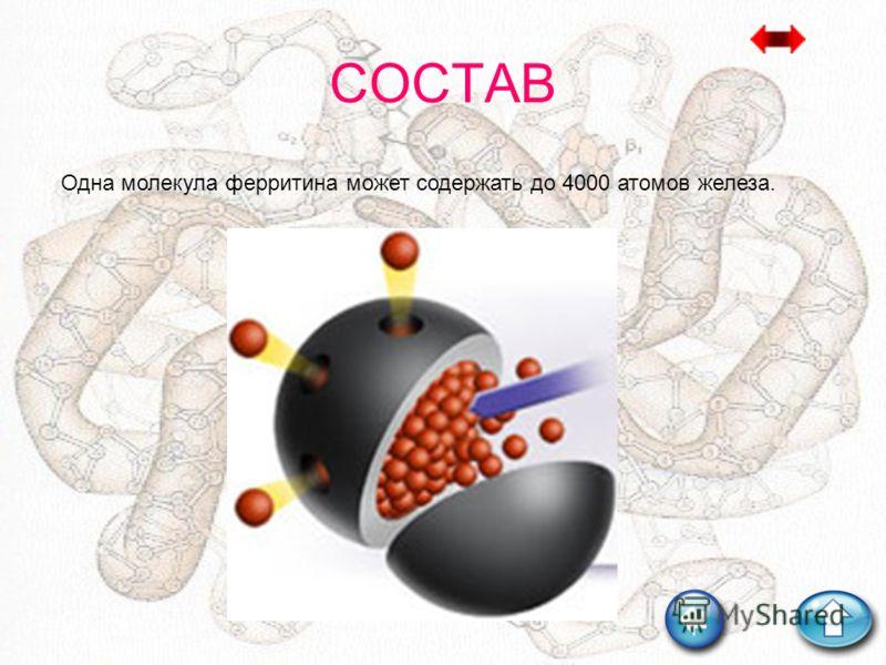 СОСТАВ Одна молекула ферритина может содержать до 4000 атомов железа.