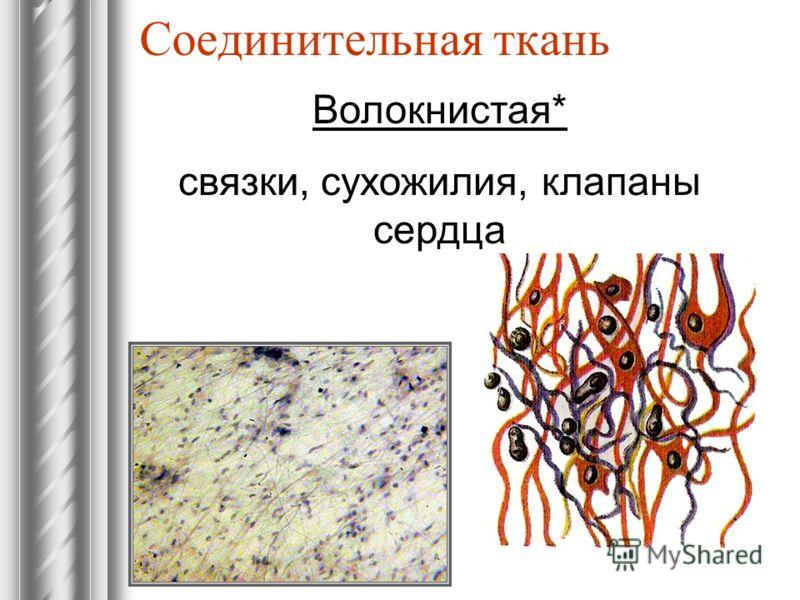 Соединительная ткань Волокнистая* связки, сухожилия, клапаны сердца