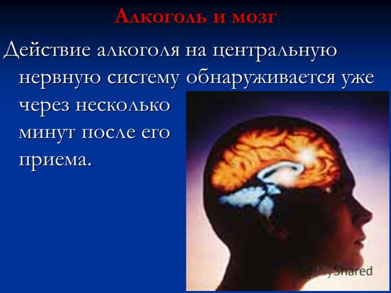 Алкоголь и мозг Действие алкоголя на центральную нервную систему обнаруживается уже через несколько минут после его приема.