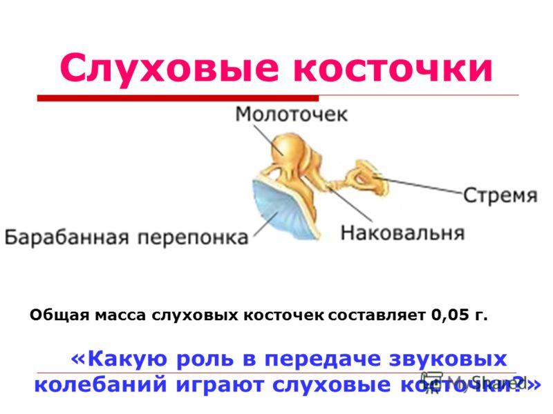Слуховые косточки Общая масса слуховых косточек составляет 0,05 г. «Какую роль в передаче звуковых колебаний играют слуховые косточки?»