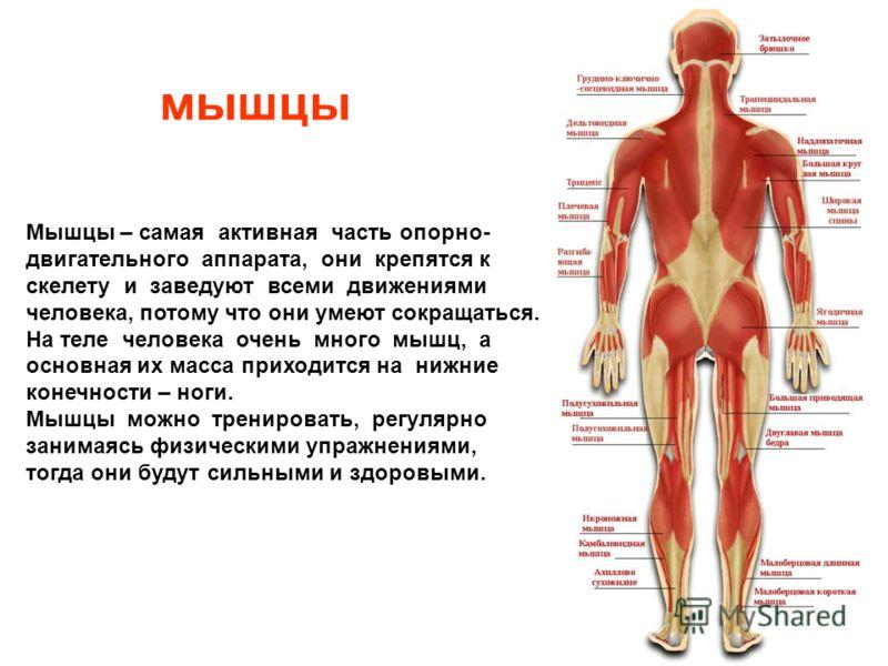 На рентгеновском снимке видны четыре поясничных позвонка На рентгеновском снимке видны четыре поясничных позвонка.