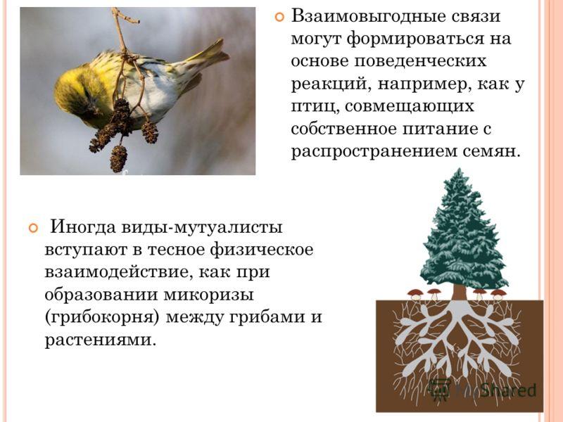 Иногда виды-мутуалисты вступают в тесное физическое взаимодействие, как при образовании микоризы (грибокорня) между грибами и растениями. Взаимовыгодные связи могут формироваться на основе поведенческих реакций, например, как у птиц, совмещающих собс