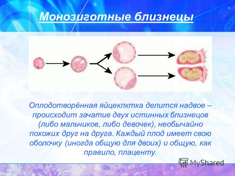 Монозиготные близнецы Оплодотворённая яйцеклктка делится надвое – происходит зачатие двух истинных близнецов (либо мальчиков, либо девочек), необычайно похожих друг на друга. Каждый плод имеет свою оболочку (иногда общую для двоих) и общую, как прави