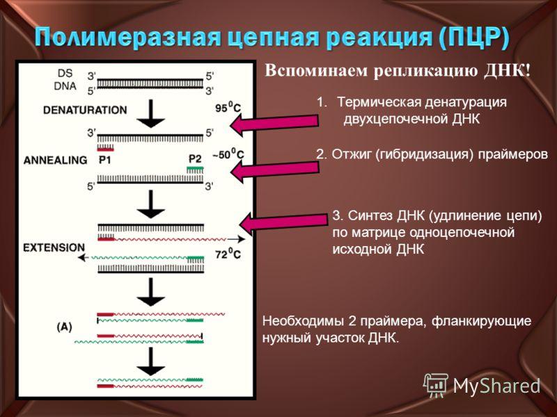 1.Термическая денатурация двухцепочечной ДНК 2. Отжиг (гибридизация) праймеров 3. Синтез ДНК (удлинение цепи) по матрице одноцепочечной исходной ДНК Необходимы 2 праймера, фланкирующие нужный участок ДНК. Вспоминаем репликацию ДНК!