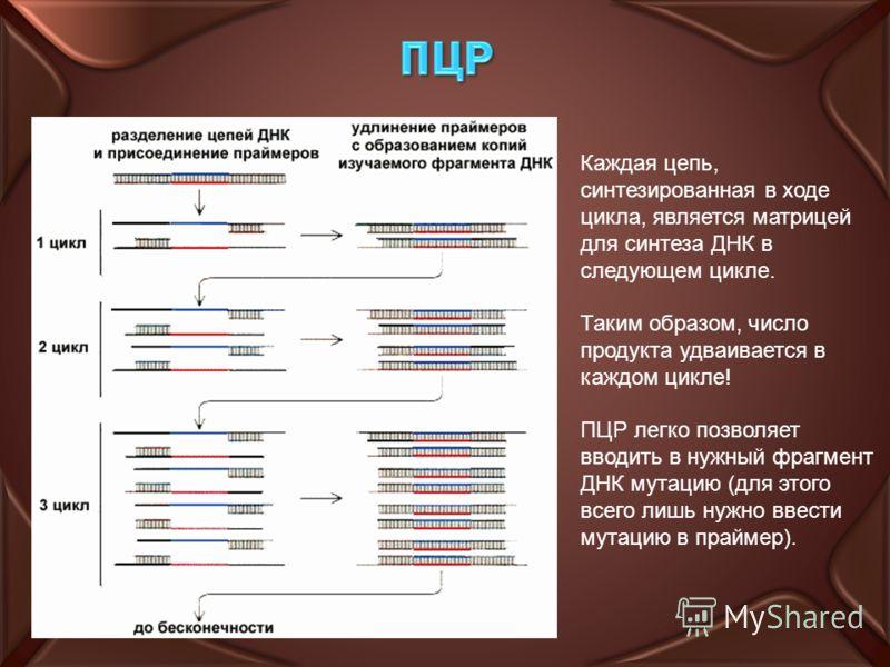 Каждая цепь, синтезированная в ходе цикла, является матрицей для синтеза ДНК в следующем цикле. Таким образом, число продукта удваивается в каждом цикле! ПЦР легко позволяет вводить в нужный фрагмент ДНК мутацию (для этого всего лишь нужно ввести мут