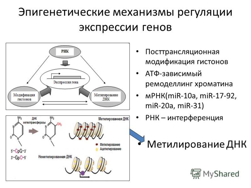 Эпигенетические механизмы регуляции экспрессии генов Посттрансляционная модификация гистонов АТФ-зависимый ремоделлинг хроматина мРНК(miR-10a, miR-17-92, miR-20a, miR-31) РНК – интерференция Метилирование ДНК