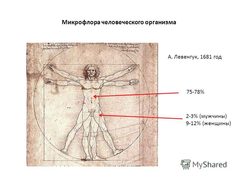 Микрофлора человеческого организма А. Левенгук, 1681 год 75-78% 2-3% (мужчины) 9-12% (женщины)
